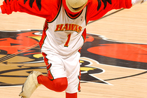 Harry The Hawk Photo Gallery