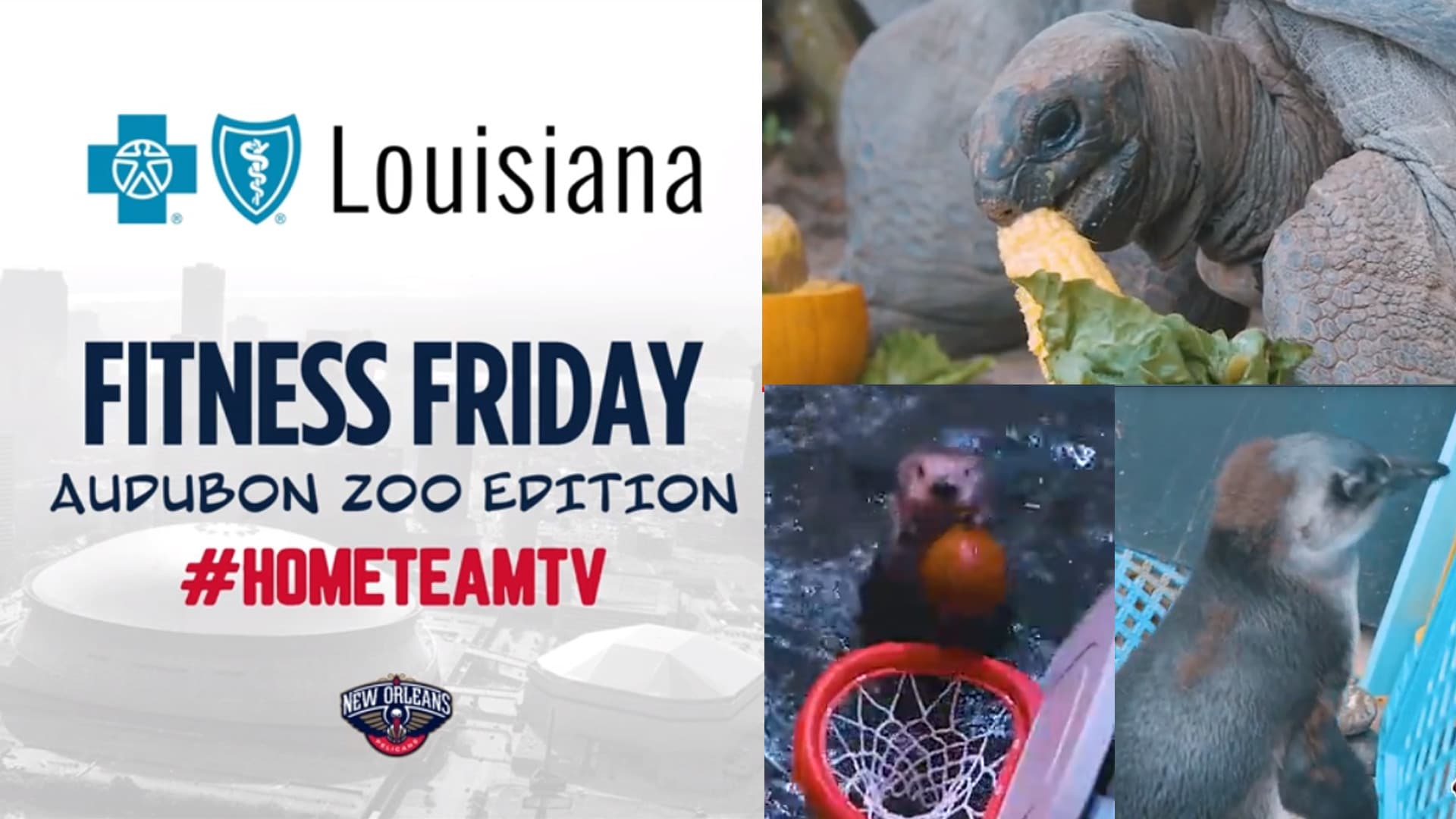 HomeTeamTV: Fitness Friday tips with Audubon Nature Institute animals