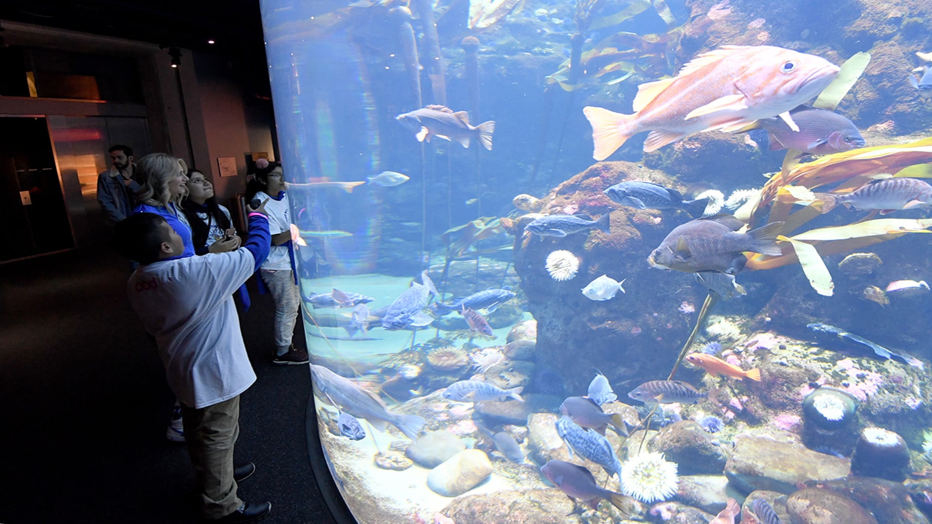 Learning Without Limits at the California Academy of Science