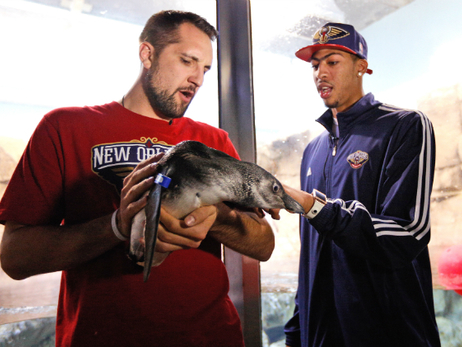 Pelicans Players Meets Fans at Audubon Aquarium