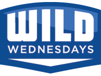 wild wednesdays