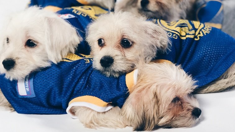 buy cheap a7cdd 3893d Dogs of Dub Nation | Golden State Warriors