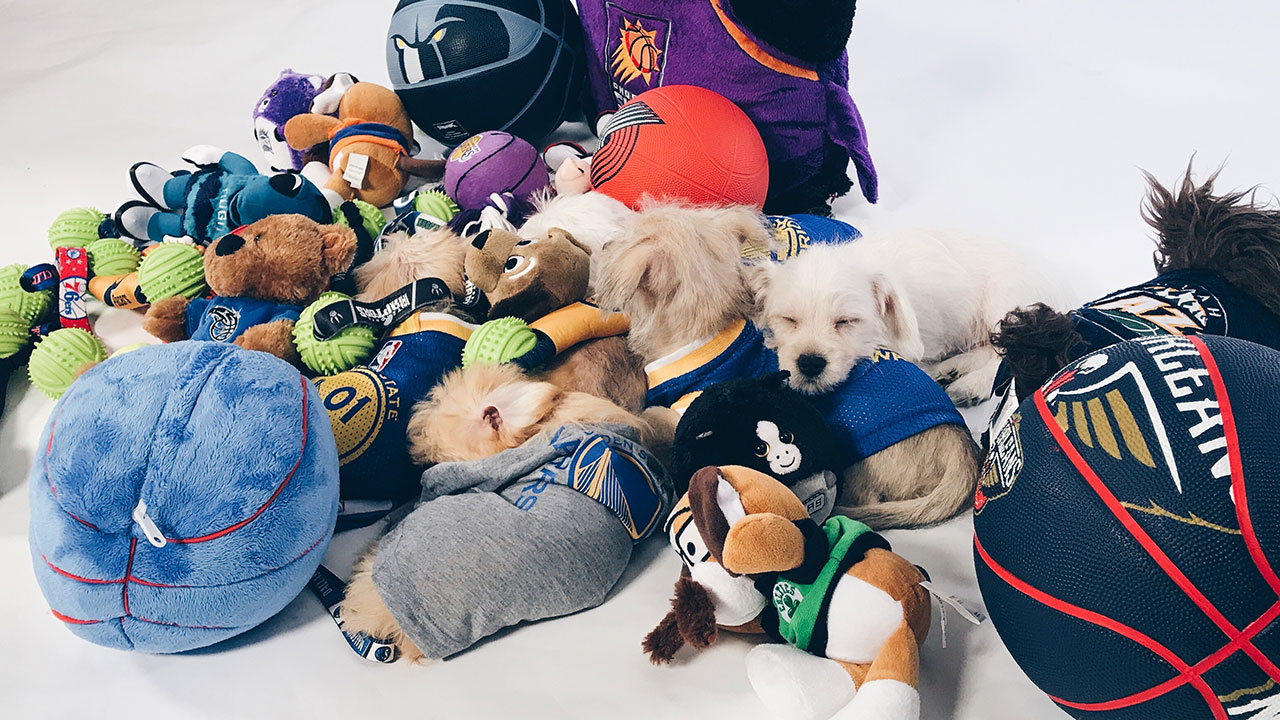 Get To Know the Warriors Puppies